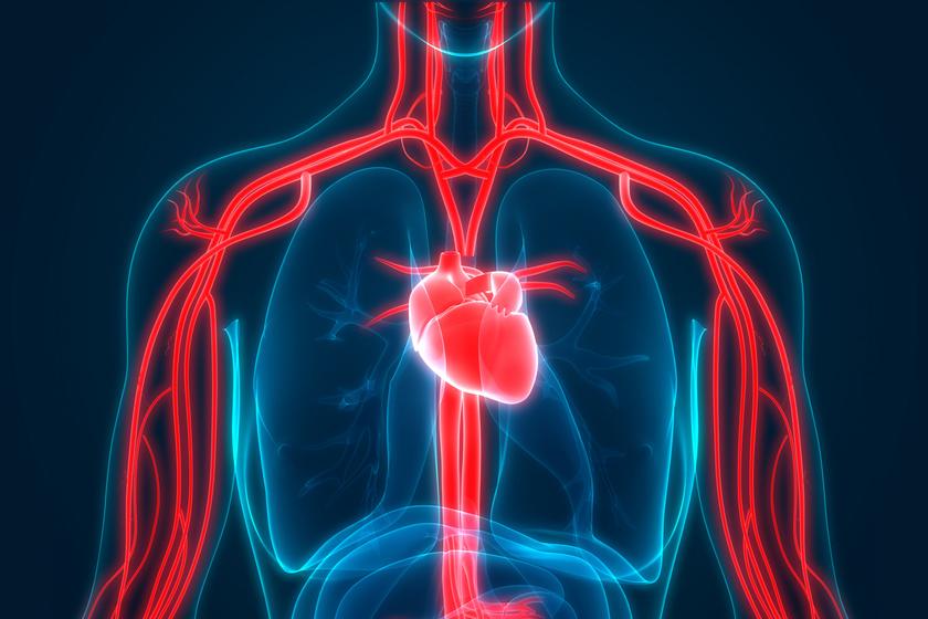 milyen szerveket érint a magas vérnyomás)