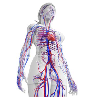 Atheroscleroticus veseartéria stenosis