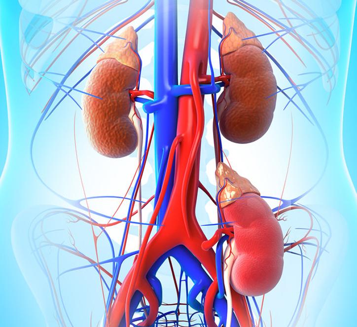 mihez vezet a vese hipertónia