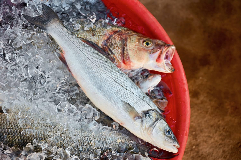 a hal hasznos magas vérnyomás esetén