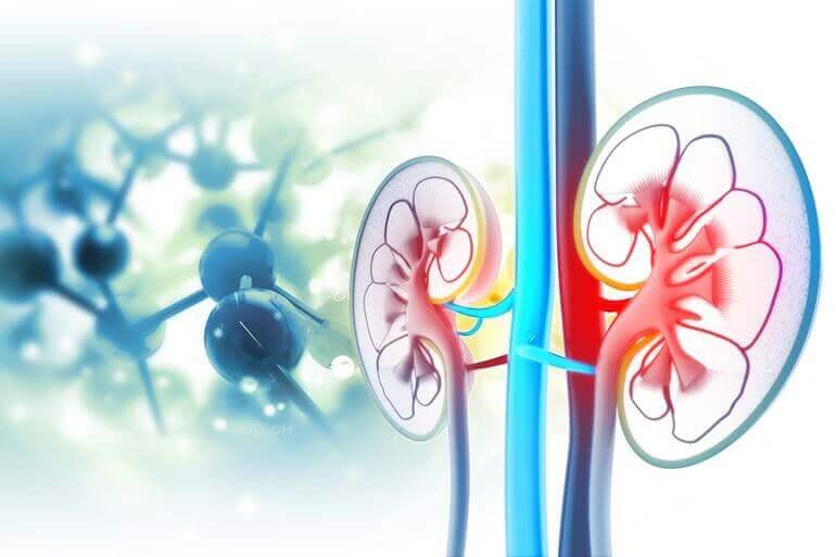 változások a vesékben magas vérnyomás esetén magas vérnyomás és kékek