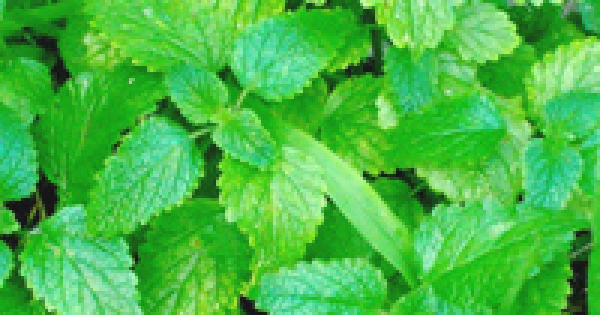 szobanövények magas vérnyomás ellen