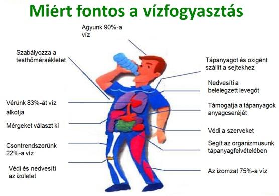 mennyi vizet kell inni naponta magas vérnyomás