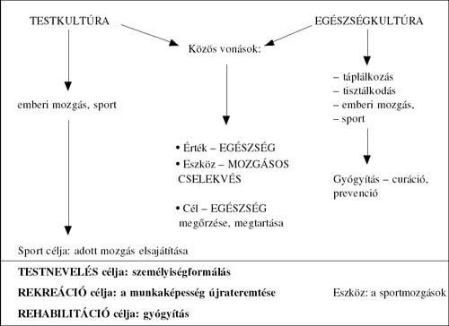 1 fokos magas vérnyomás és testnevelés)