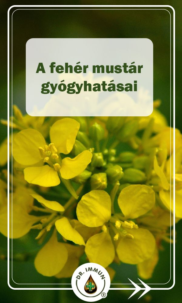 mustár magas vérnyomás esetén