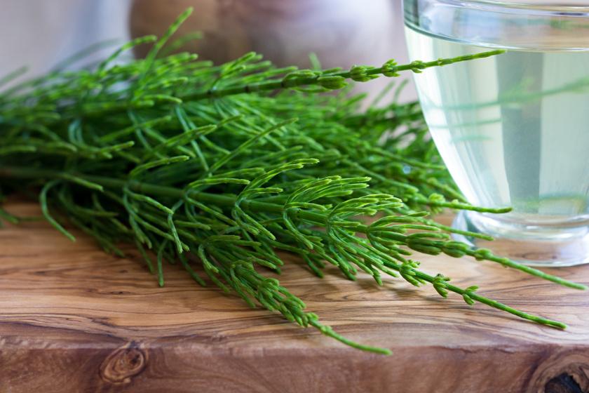 milyen növények segítenek a magas vérnyomásban