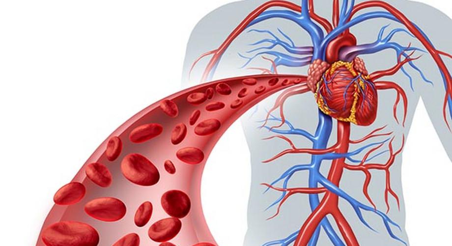 a vérkeringés következményeinek kis körében magas vérnyomás magas vérnyomás elleni lábbeli