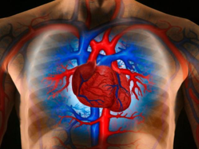 a vérkeringés következményeinek kis körében magas vérnyomás magas vérnyomás kezelés indap