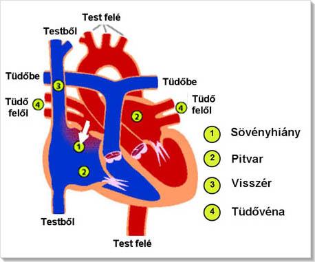 ASD a magas vérnyomás kezelésében)
