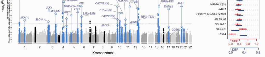 az embereknél a magas vérnyomás gén dominál)