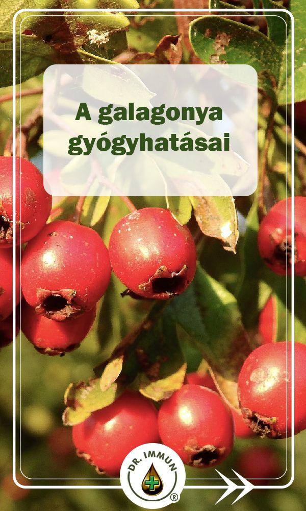 galagonya és a szív és a magas vérnyomás receptjei)