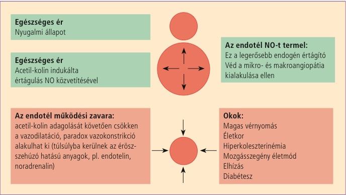 hipertóniás betegség