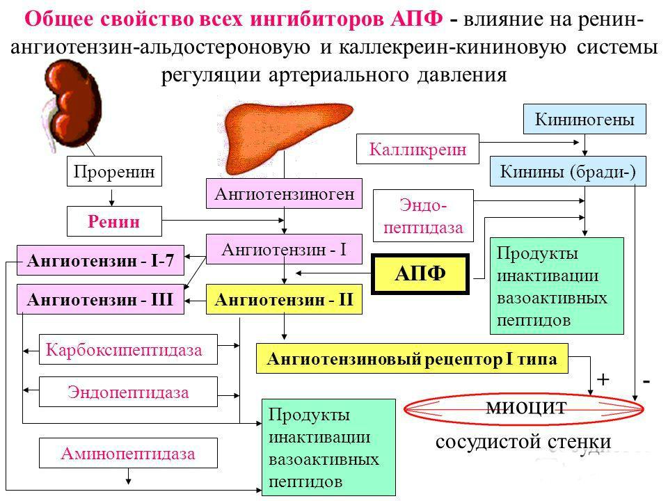 magas vérnyomás nyomás 190-120)