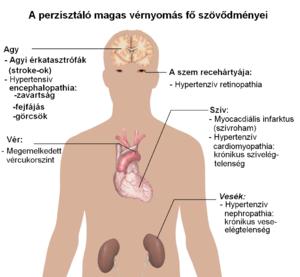 magas vérnyomás yang vagy yin sympatho mellékvese-krízis magas vérnyomással