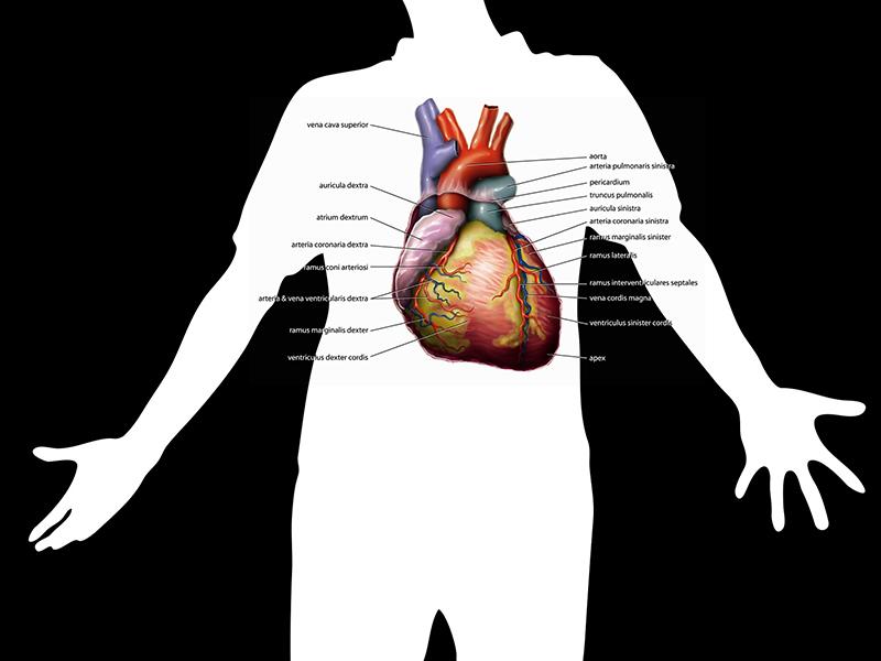 mik a hipertónia receptjei lehet-e enni sóska hipertóniával