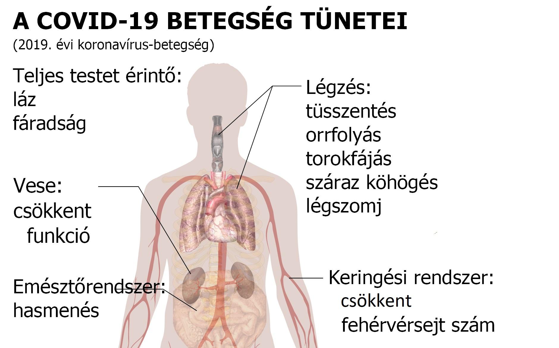 milyen szerveket érint a magas vérnyomás