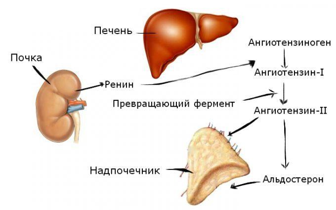 centrogén hipertónia