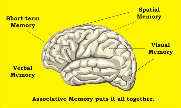 a magas vérnyomás hatása az agyra)
