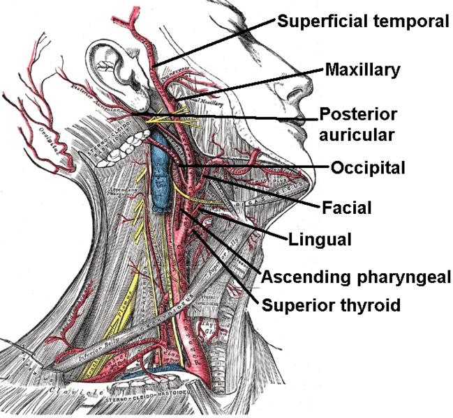 hipertónia a hipertől