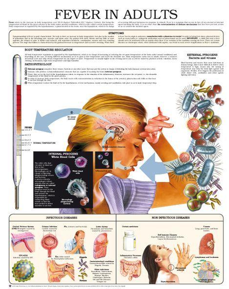 venarus és a magas vérnyomás magas vérnyomás 3 fok hogy a fogyatékosság ad-e